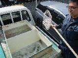鮮魚-トラック